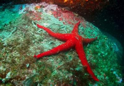 Agenzia/operatore Turistico Il Faro Diving Center